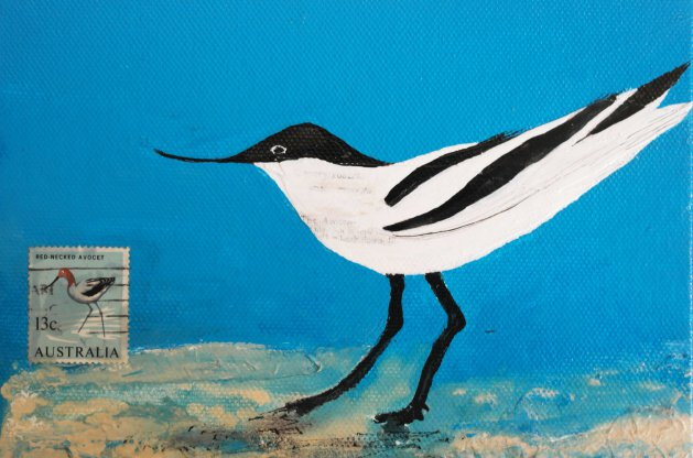Avocet. Original art by Nikki Griffith