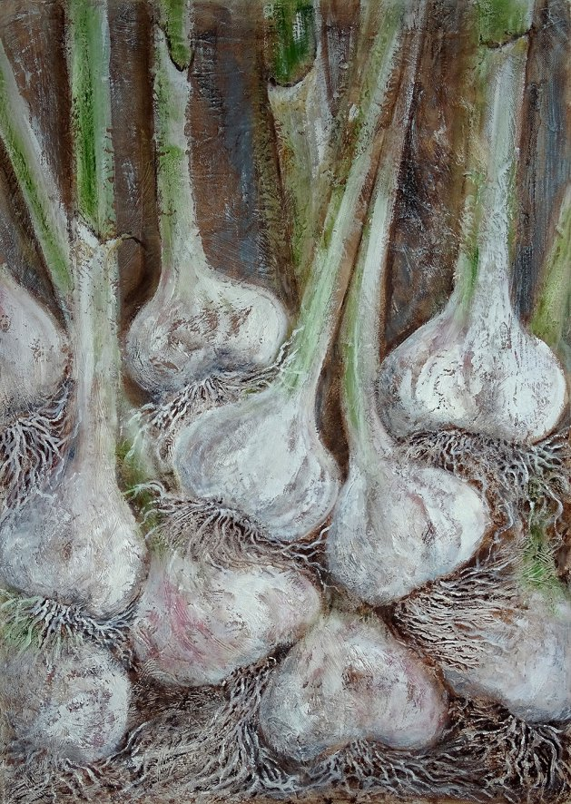 Garlic. Original art by David Snook