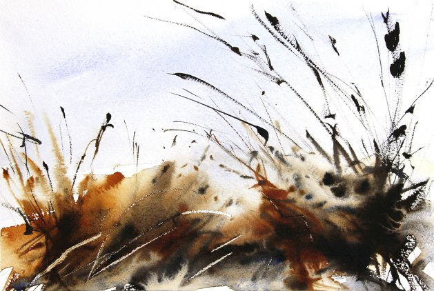Winter Grasses. Original art by Adrian Homersham
