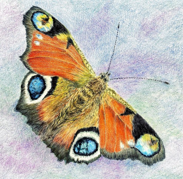 Peacock Butterfly. Original art by Patricia Waller