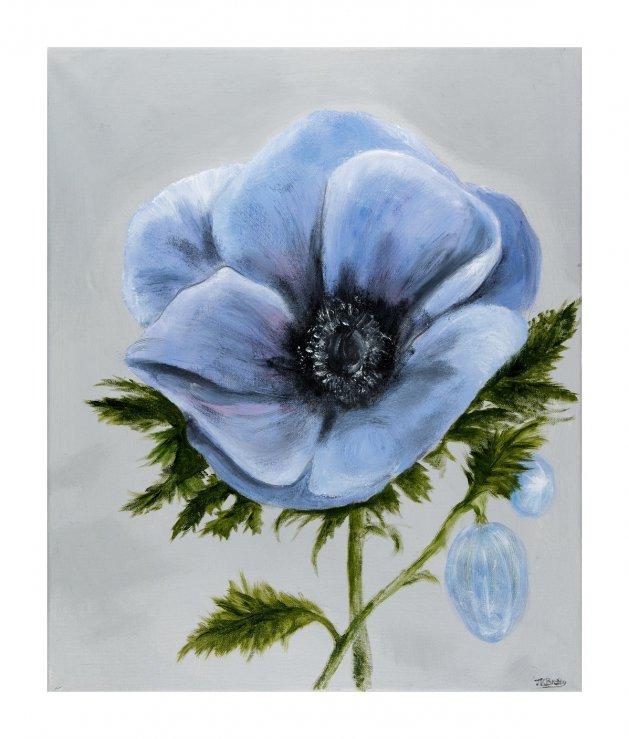Blue Anemone. Original art by Jennifer Bratby