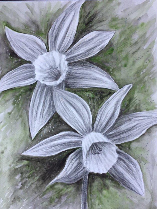 Daffodils. Original art by Fiona Calvert