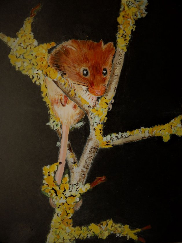 Harvest Mouse. Original art by Ros Tyrrell