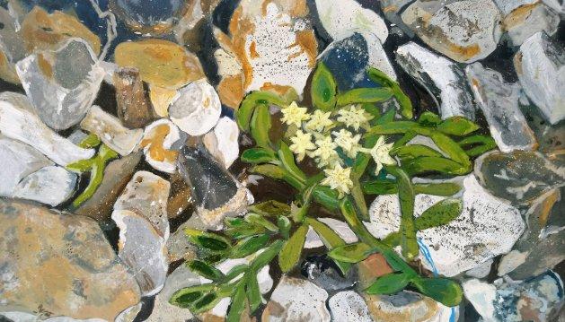 Rock Samphire and Shingle. Original art by Ros Tyrrell
