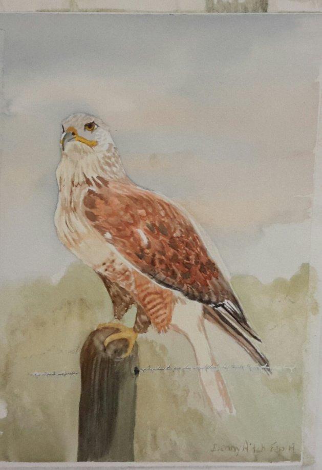 Hawk. Original art by Denny Aitch