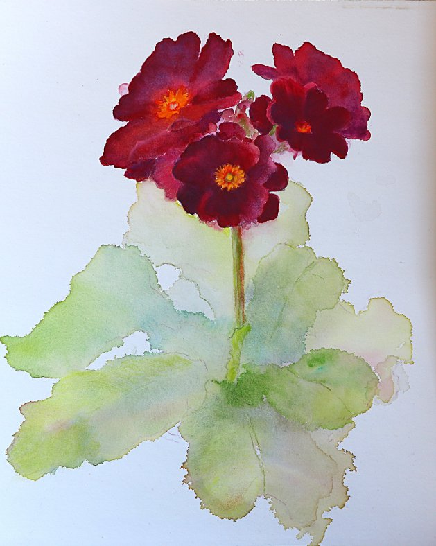 Polyanthus. Original art by Christine Derrick