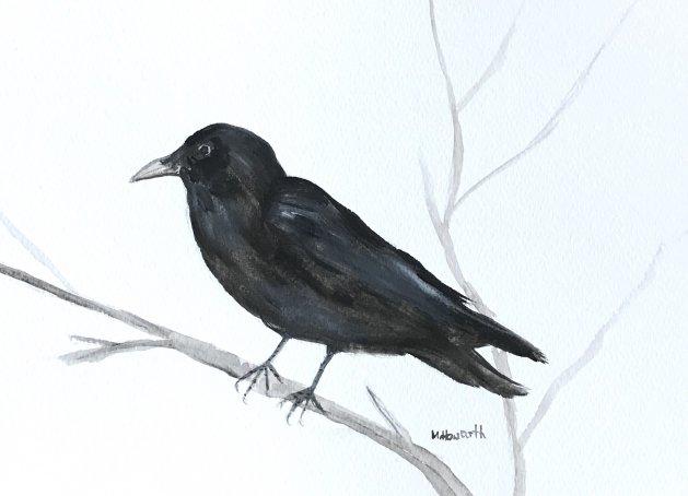 Black bird. Original art by Monika Howarth