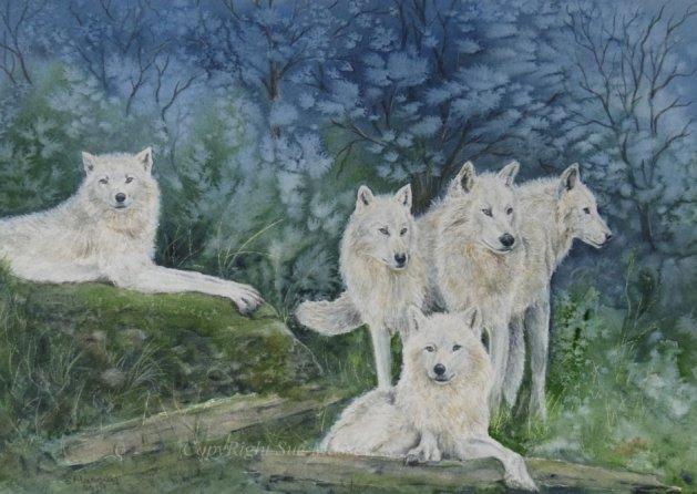 The White Wolf Pack.. Original art by Sue Massey