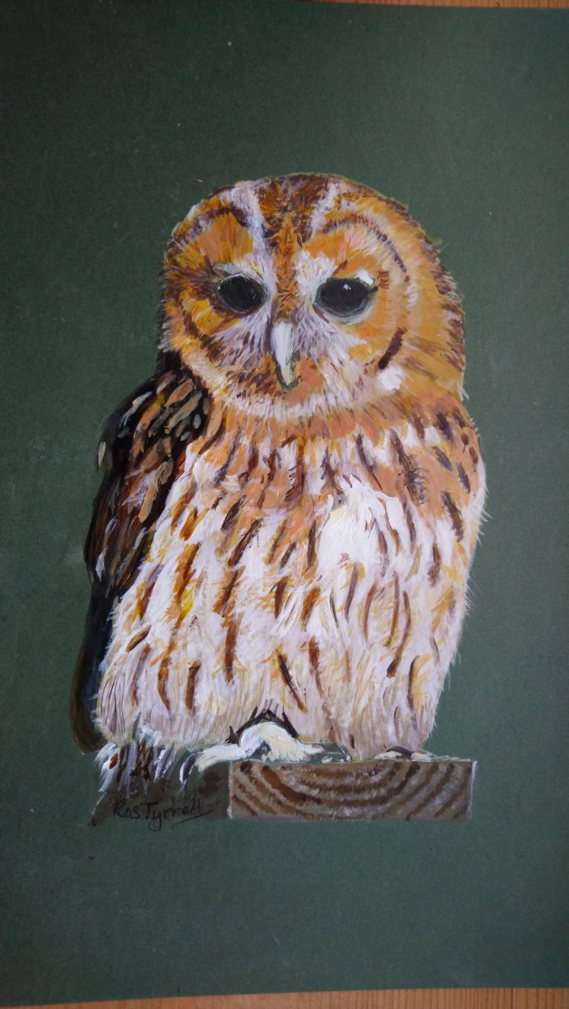 Tawny Owl. Original art by Ros Tyrrell