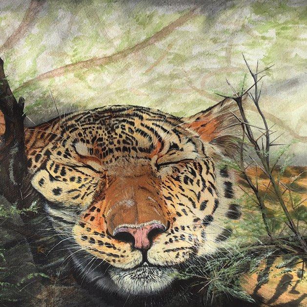 Snoozing leopard. Original art by Janet Blower
