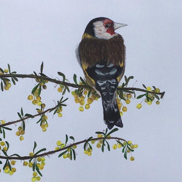 Goldfinch. Original art by Janet Blower
