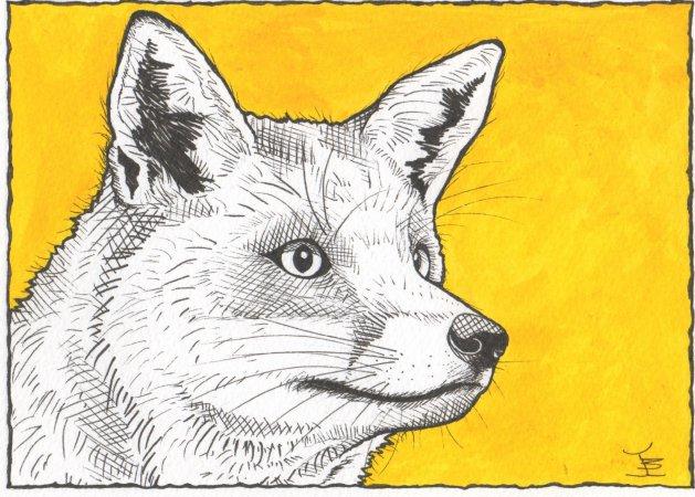 Fox. Original art by Jane Brookshaw