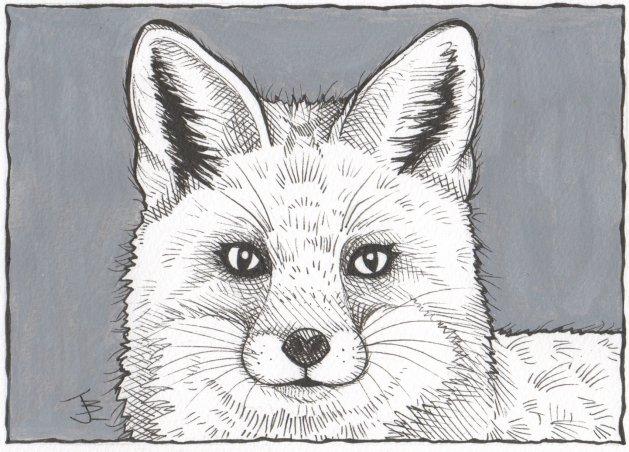Mr. Fox. Original art by Jane Brookshaw