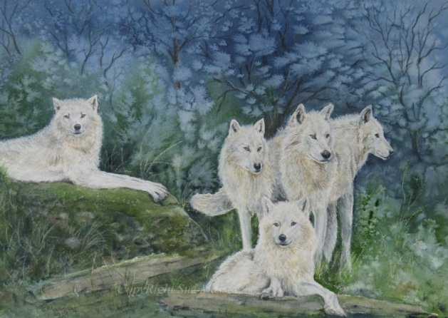 The White Wolf Pack.. Original art by Sue Massey