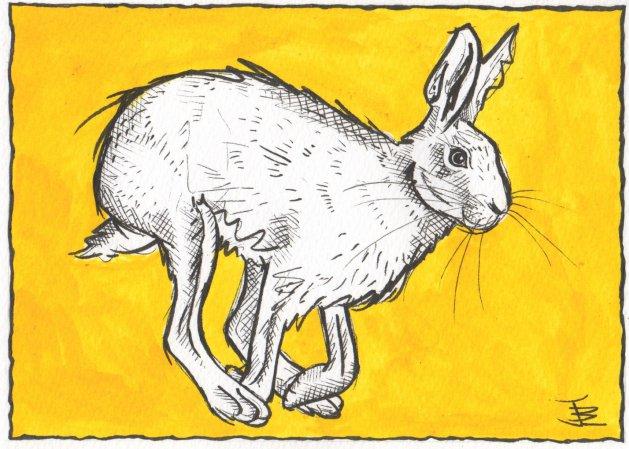 Running Hare. Original art by Jane Brookshaw
