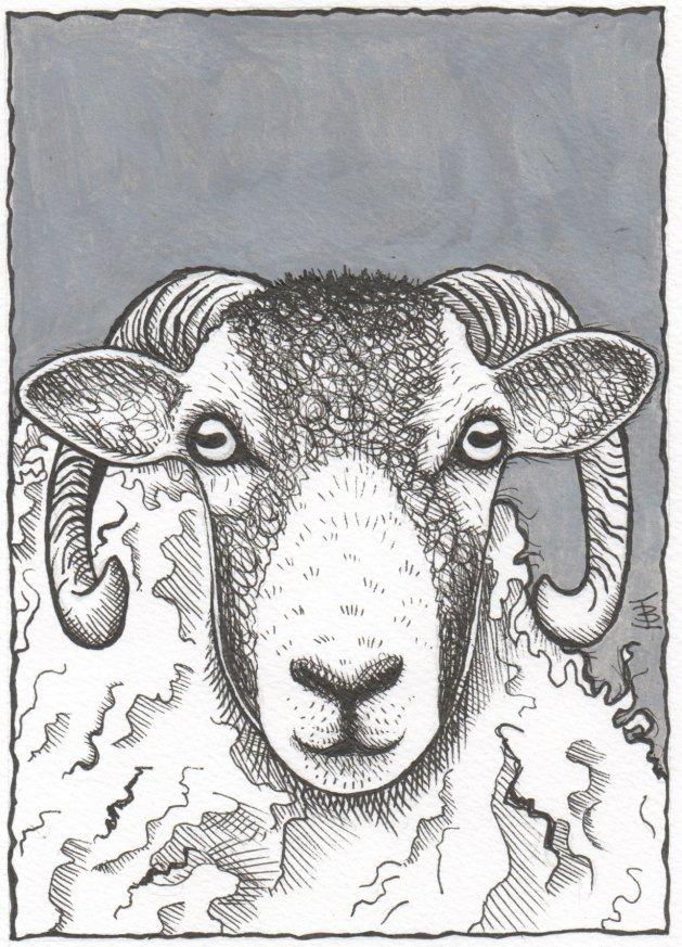 Swaledale Sheep. Original art by Jane Brookshaw