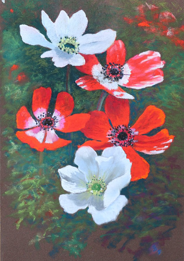 Anemones. Original art by Christine Derrick