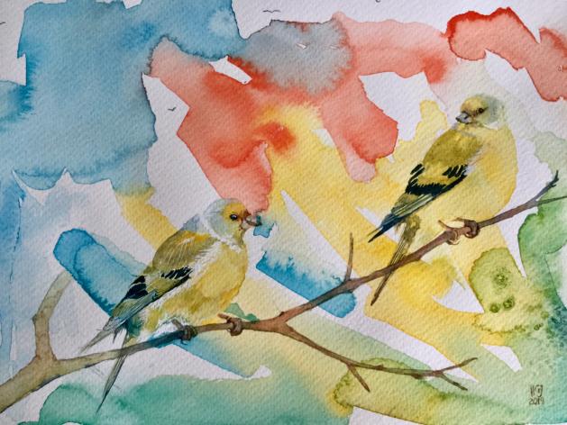 Citril Finches; Birds. Original art by Hilary Garnock-Jones