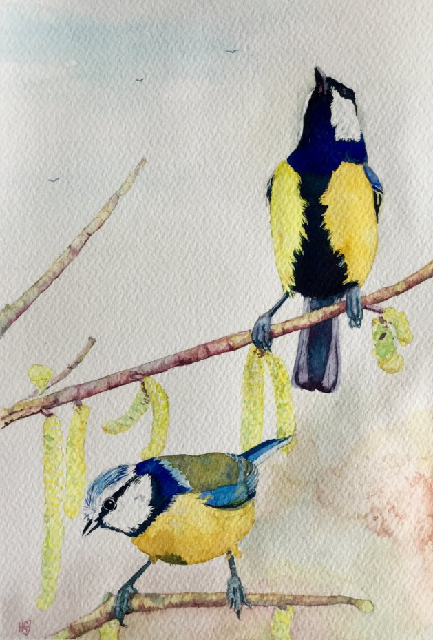 Blue Tits & Catkins. Original art by Hilary Garnock-Jones