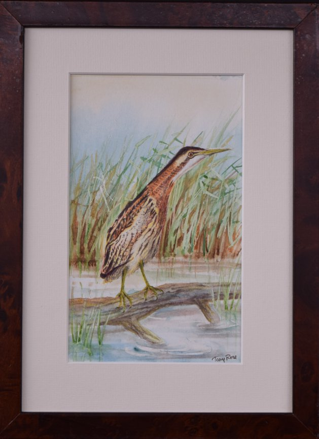 Bittern Hunting. Original art by Anthony Rose