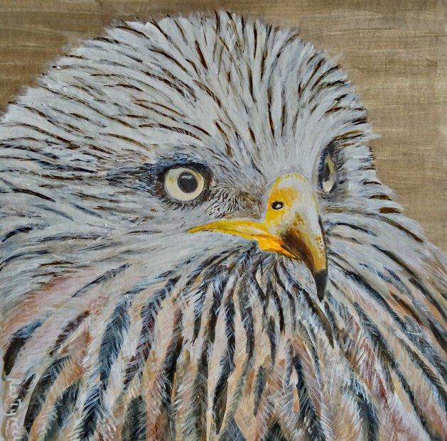 Red Kite. Original art by Ros Tyrrell