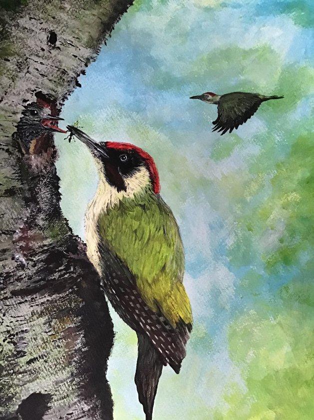 Woodpeckers feeding. Original art by Janet Blower