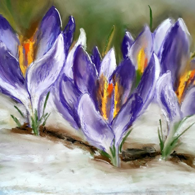 crocus in snow. Original art by Jackie Marsh