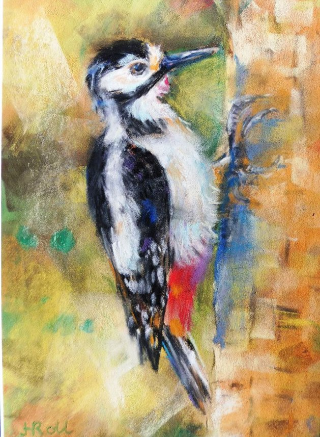 Greater Spotted Woodpecker. Original art by Heather Roll