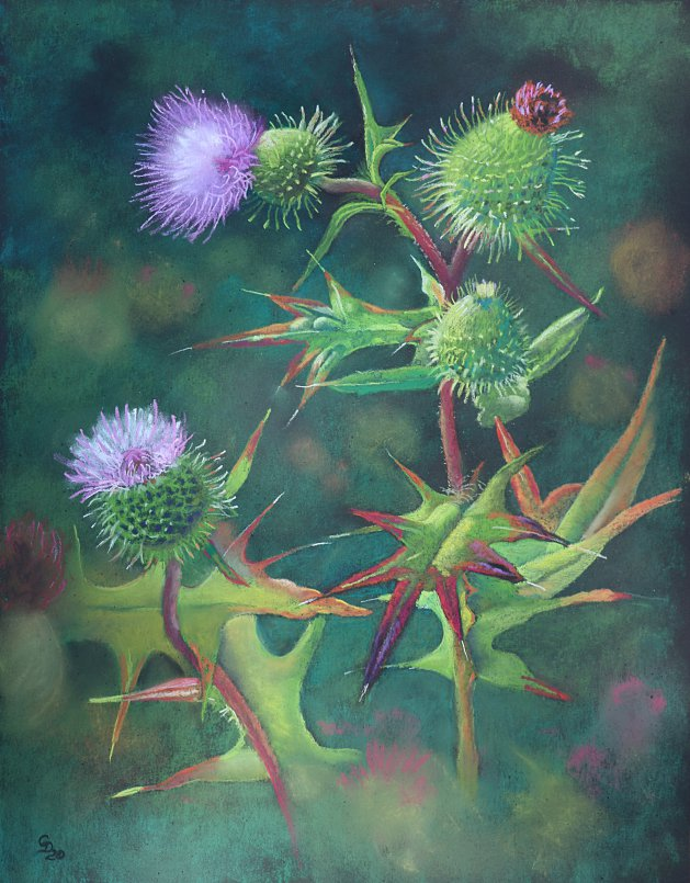 Thistles. Original art by Christine Derrick