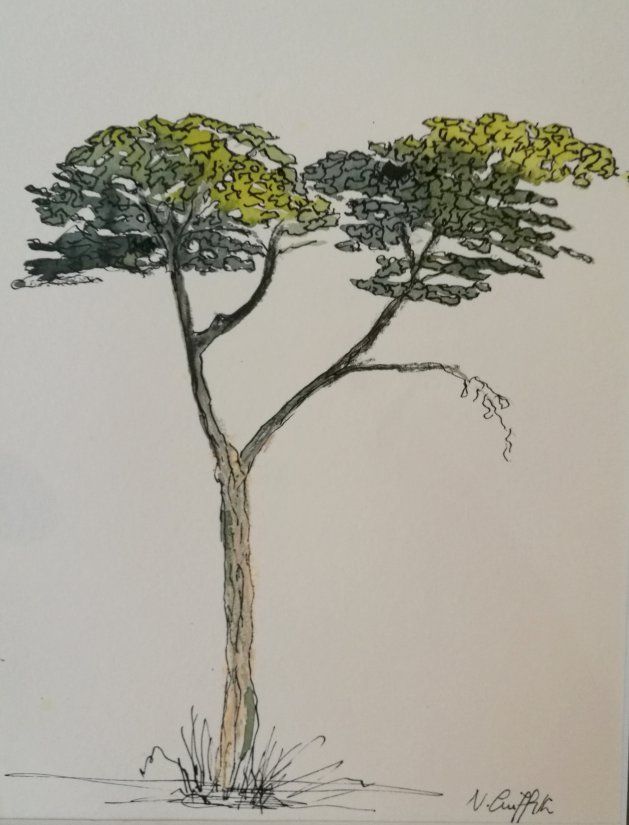 Fowey Tree. Original art by Nikki Griffith