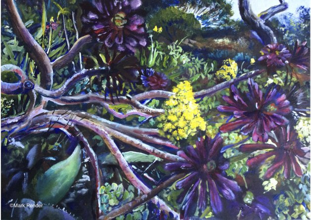 Succulents on Tresco. Original art by Mark Pender