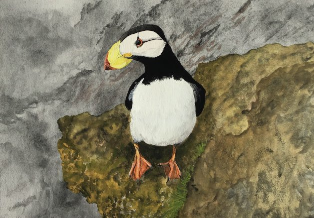 Puffin on a rock. Original art by Janet Blower