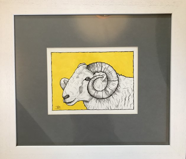 Welsh Mountain Ram. Original art by Jane Brookshaw