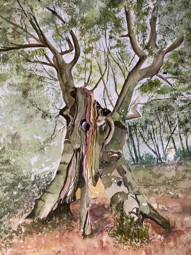 Sweet Chestnut Tree. Original art by Janet Bramley